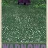 RYSZARD_KAJA_PLAKAT_POLSKA_003_WARNOWO